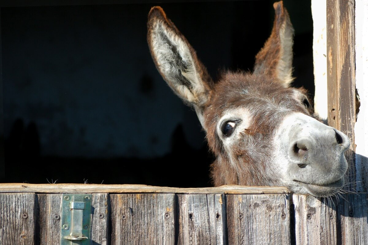 Was ist eine Eselsbruecke?