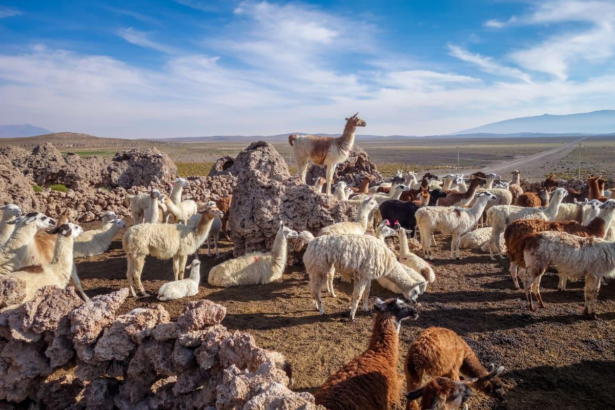 Spanische Grammatik: Unterschied zwischen hay und estar