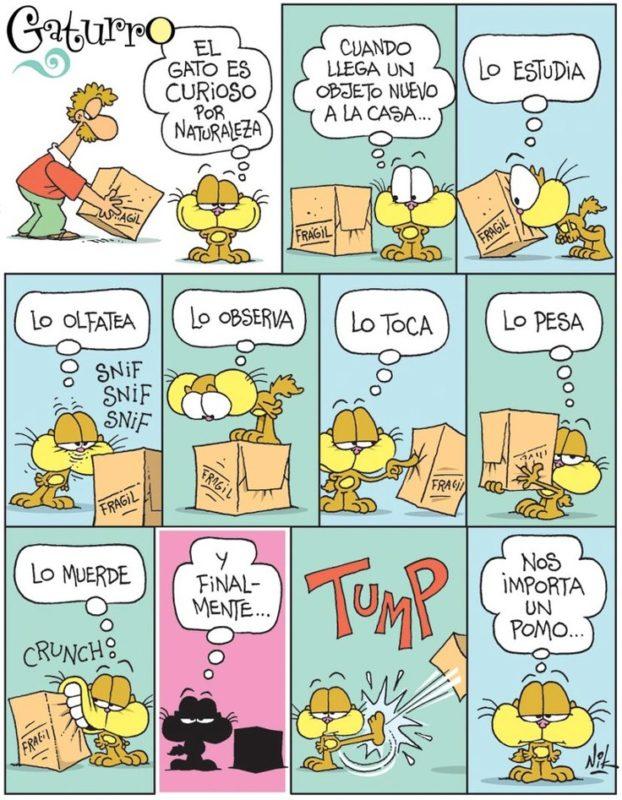 spanisch-direkte-indirekte-objektpronomen-regeln