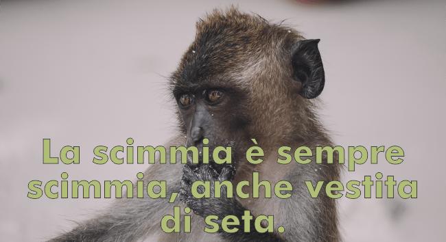 lustige-italienisch-sprueche-mit-uebersetzung